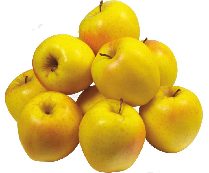 Golden elma