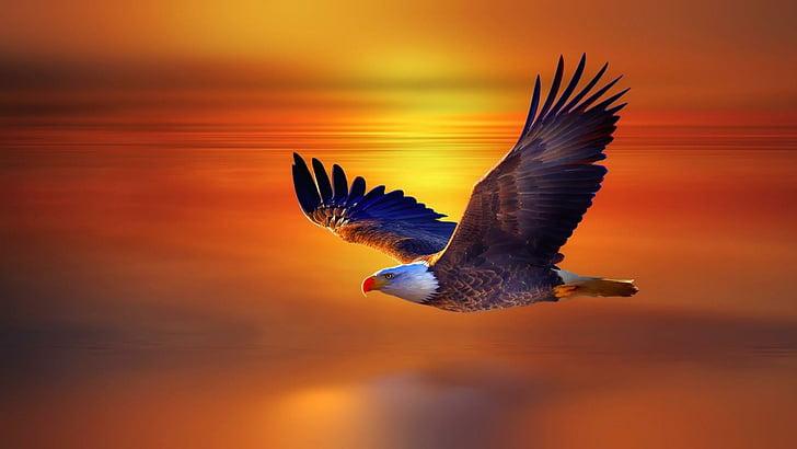 Kuşlar Neden Güneye Uçar
