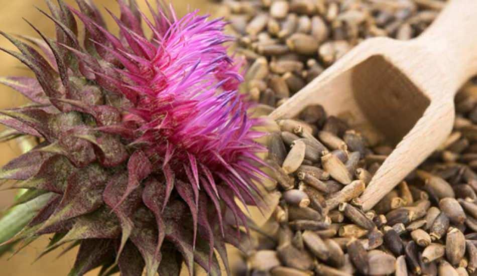 Mübarek Diken tohumları